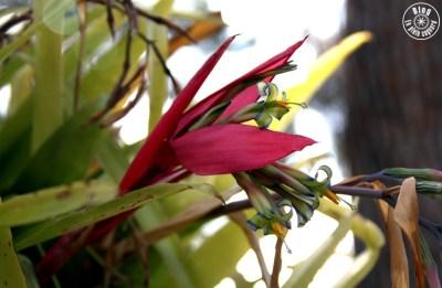 jardin saint-bernard hyères
