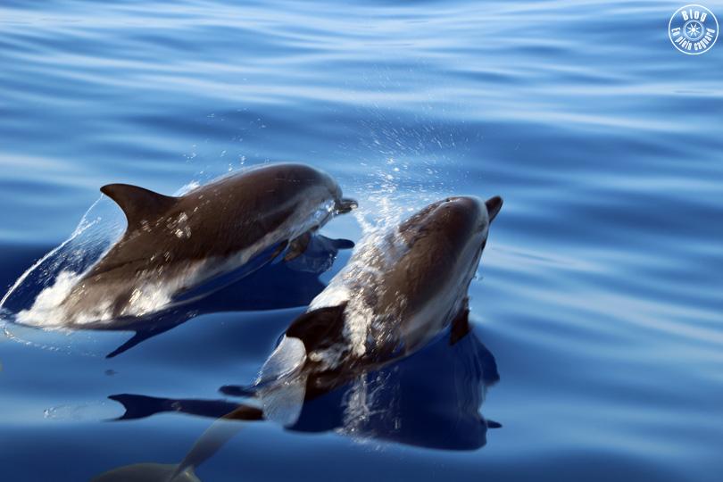 A la rencontre des dauphins | Hyères-les-Palmiers