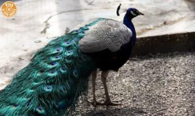 parc-olbius-riquier-hyères-25