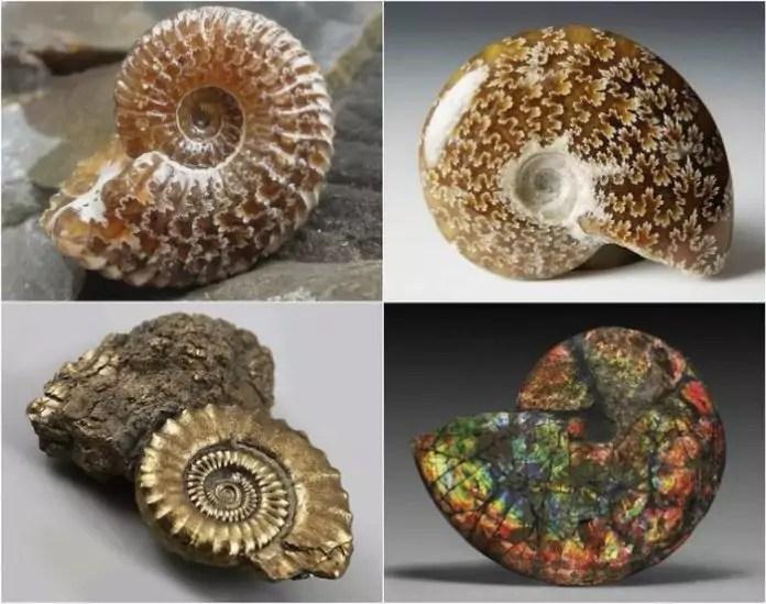 mi a legpontosabb módszer a fosszíliák randiához