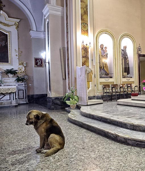 http://www.pawnation.com/2013/01/16/italy-dog-frequent-churchgoer-since-owner-died/4