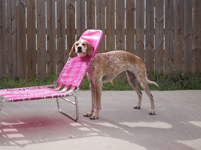 stuck pets, pets stuck pretending everything is cool, dog stuck beach chair