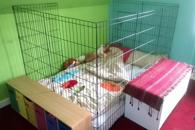 epileptic girl in cage