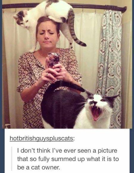 weird cats, evil cats, girl with cats selfie