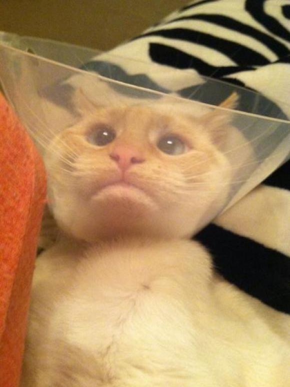 pets that stopped working