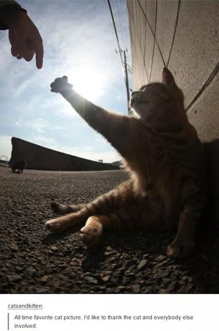 weird cats, evil cats, creation of adam cat