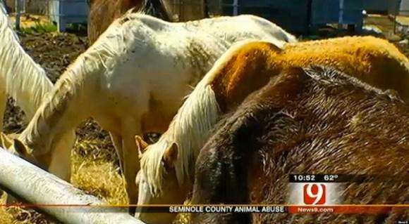 worst hoarder cases, hoarder cases that will make you puke, caroline vaughn 30 dead horses