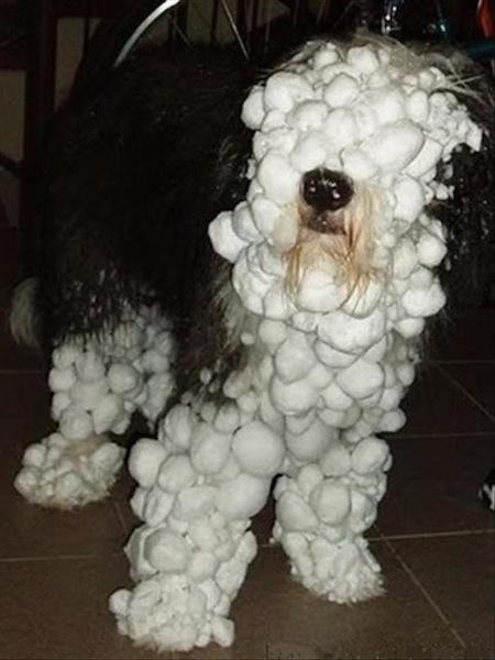 funny winter photos, funny snow photos, idiots in winter, snow face dog
