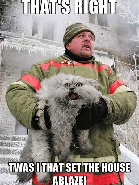 weird cats, evil cats, fireman with guilty cat