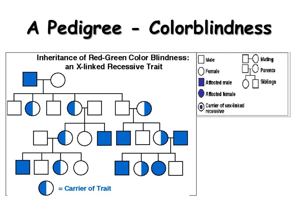 Is Color Blindness Recessive
