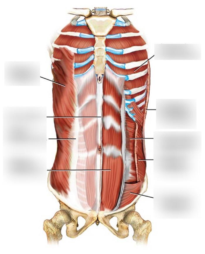 Anatomy 2 quizlet. Anatomy 2 Exam 2 (chapter 7 ...