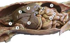 Anatomy Lab Test 2 flashcards | Quizlet