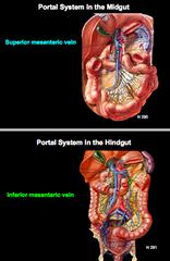 Anatomy I: Midgut and Hindgut Flashcards   Quizlet