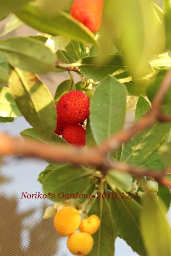 姫イチゴの木