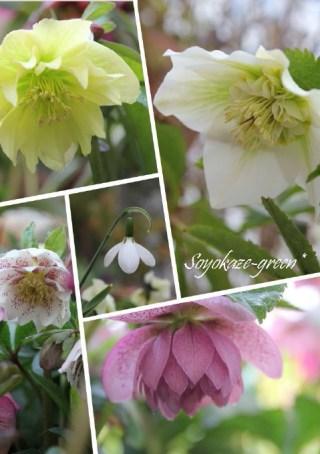 お花のコラージュ写真*