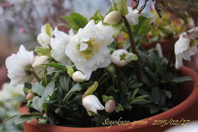 img_flower149