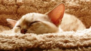 【VS睡眠・徹夜】フリーランスの強い味方