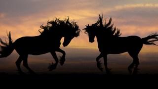 【伝説・神話・実話】英雄たちが愛した名馬たち