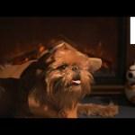 Star Wars Holiday Yule Log with Ewok!