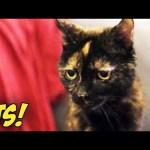 WE GOT A GRUMPY CAT! (BTS)
