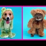 Easy DIY Pet Costume