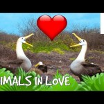 If Animals Complained About Dating – Talk Like the Animals