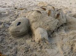 sand turtle
