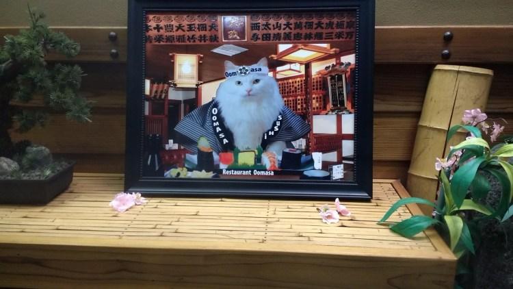 Sushi kitty