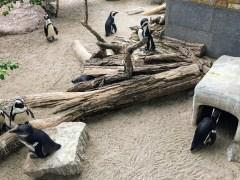 Leipzig Zoo penguins