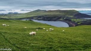 Stórhöfði ทางตอนใต้ของเกาะ Westman Islands