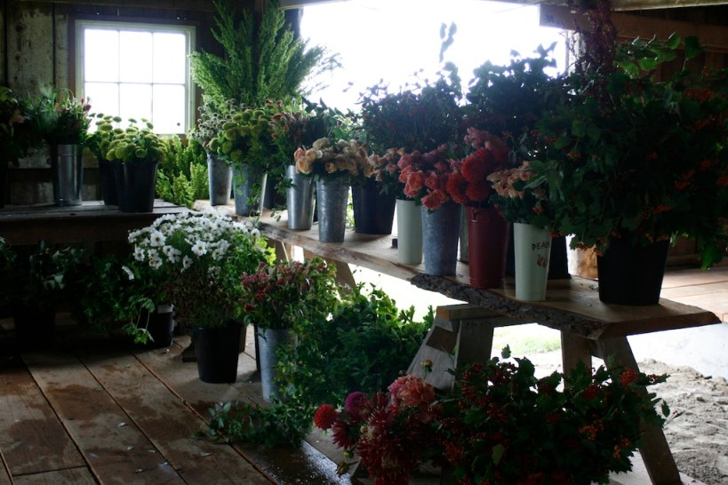 buckets of flowers in the barn