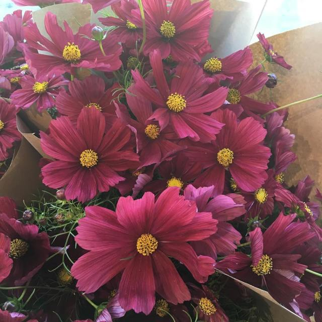 Long weekend special!!! locally grown cosmos 20bunch stop in andhellip