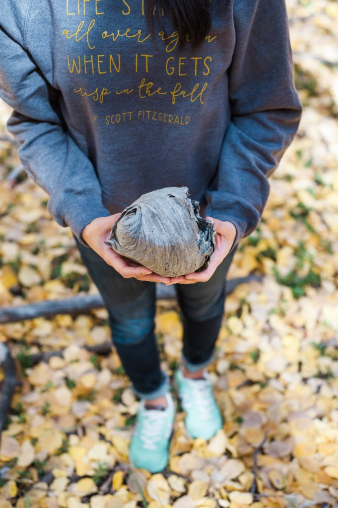 Colorado in the fall. Aspen leaves and fall sweatshirts!