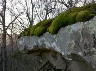 mossy rock outcrop