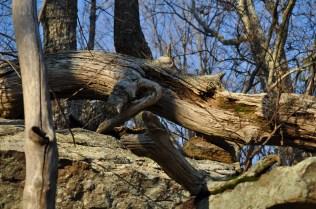 weathered cedar log
