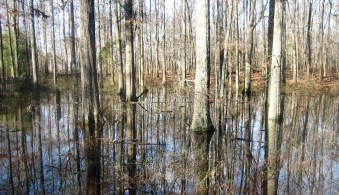 one of two wetlands at Oak Bluff