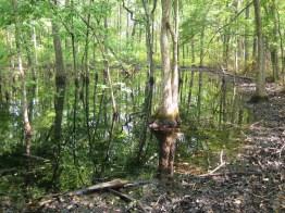 wetland in summer