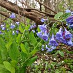Lebline Woods Preserve