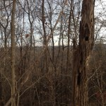 Riverview Preserve