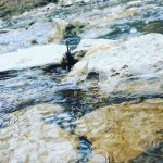 May 19 – Creek Exploration and Forest Walk
