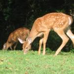 Nov 17 – Dec 1 – Nature Quest Challenge 5: Animal Evidence (Scat, Tracks, etc!)