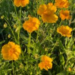 Aug 28 – Fall Native Wildflower Arrangement at Monarch Meadows Nature Preserve