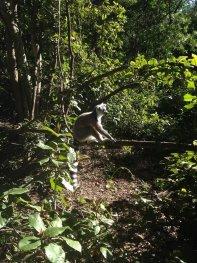Gr1-Monkeyland (6)