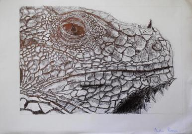Oakhill Grade 9 Art (7)