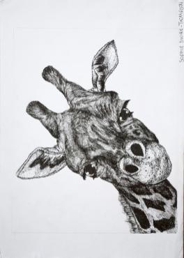 Grade 9 line drawings (6) (Copy)