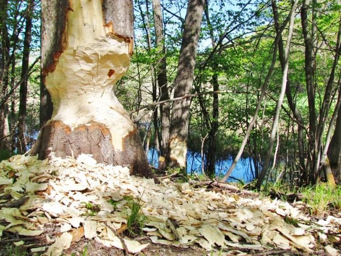 Rose Oak County Park.