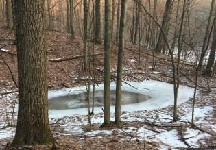 Vernal Pond; Jan. Addison