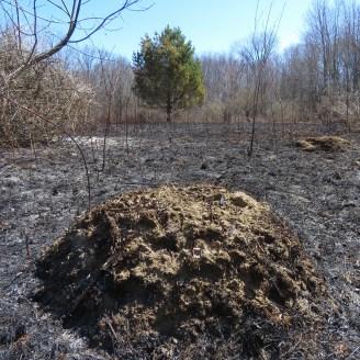 Allegany Ant Mound