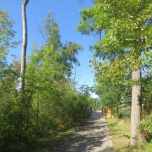 A cement path with trees on either side. The bright blue sky can be seen through the trees.