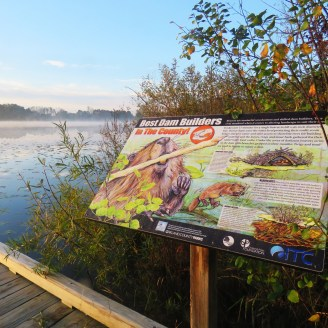 An interpretive sign about beavers placed next to a dock on a lake that has light lifting fog.